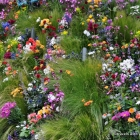 Riot of multicolor plantings