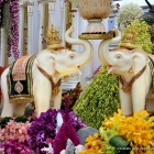 Thailand's orchids and elephants