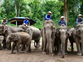 Excursion to the elephant camp Myanmar